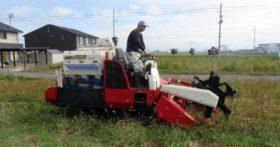 先日会社の蕎麦畑でそばの刈り取りを行いました
