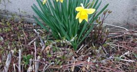 3月25日(水)昨日とは打って変わりとても良い天候です