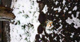 3月24日(火)は暖冬の中、珍しく雪が降りました