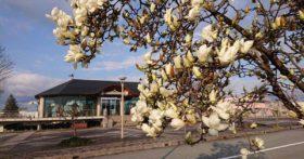 四月五日(日)はいい天気少し肌寒いですが良い天気