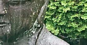 7月28日は一日中雨でした、そんな中でもトンボがいました